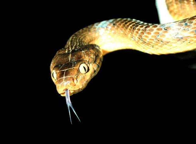 Bu da yılan burcunun özellikleri