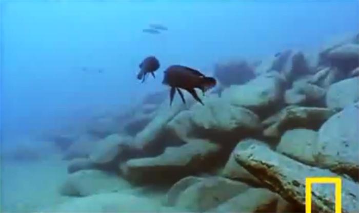 Bu da balıkların kavgası