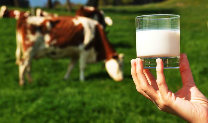 Sütün içindeki mucize iksir