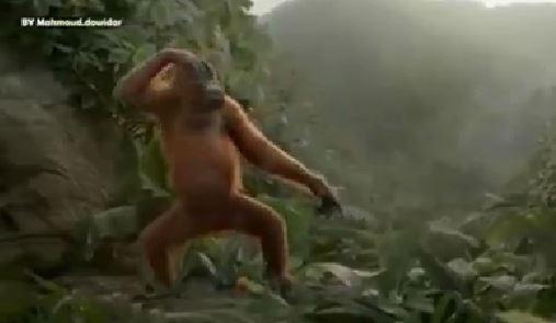 Bu maymun oryantal oynuyor