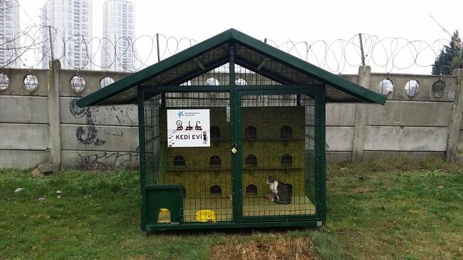 kedi-evleri-kucukcekmece-belediyesi (2)