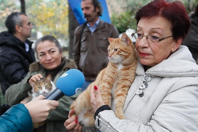 kedi-evleri-kucukcekmece-belediyesi (3)