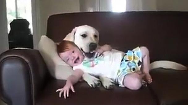Sadık dost köpeğin bebek sevgisi…