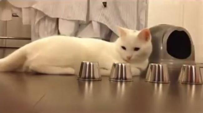 Kedinin muhteşem sezgisi