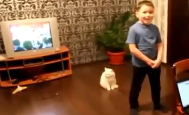 Şarkıdan nefret eden kedi böyle saldırdı