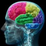 Beyni tüketen ve öldüren 11 gıda maddesi Daily Mail gazetesi beyni tüketen ve öldüren 11 gıda maddesini yayınladı. Bu maddeleri tüketmek adeta intihar gibi...