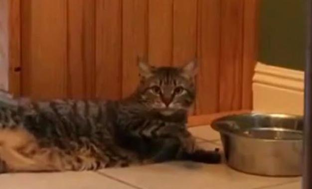 Böyle su içen kedi görmediniz