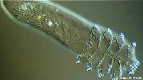 bircogumuzu-yuzunde-yasiyorlar-1