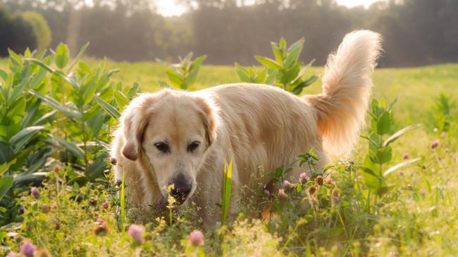 En güzel köpekler podyuma çıktı